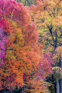 USA, Virginia, Mclean. Scenic in Great Falls State Park by Jay O'brien