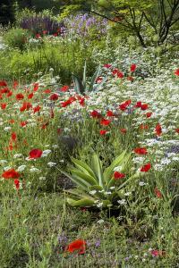 USA, Wayne, Pennsylvania. Summer Flowers in Chanticleer Garden by Jay O'brien