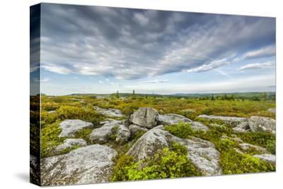 USA, West Virginia, Davis. Landscape in Dolly Sods Wilderness Area.