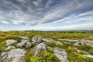 USA, West Virginia, Davis. Landscape in Dolly Sods Wilderness Area. by Jay O'brien