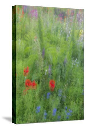 Wayne, Pennsylvania. Summer Flowers Abstract in Chanticleer Garden