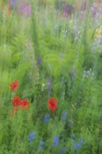 Wayne, Pennsylvania. Summer Flowers Abstract in Chanticleer Garden by Jay O'brien