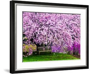 Wooden Bench under Cherry Blossom Tree in Winterthur Gardens, Wilmington, Delaware, Usa by Jay O'brien