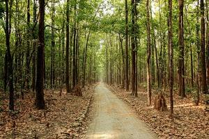 Sitabani, Jim Corbett Park, Nainital by Jayesh Bheda