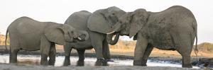 Africa, Botswana, Senyati Safari Camp. Elephants at waterhole. by Jaynes Gallery