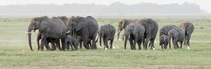 Africa, Kenya, Amboseli National Park. Elephants on the march. by Jaynes Gallery