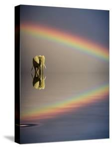 Africa, Kenya, Masai Mara Game Reserve. Composite of Bull Elephant, Water and Rainbow by Jaynes Gallery