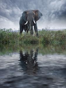 Africa, Kenya, Masai Mara Game Reserve. Composite of Elephant Reflecting in Water by Jaynes Gallery