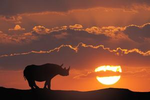 Africa, Kenya, Masai Mara Game Reserve. Composite of White Rhino Silhouette and Sunset by Jaynes Gallery