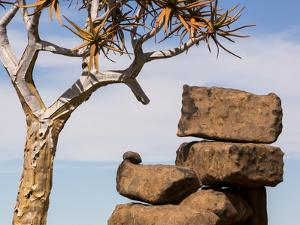 Africa, Namibia. Boulders and Quiver Tree in Giants Playground by Jaynes Gallery