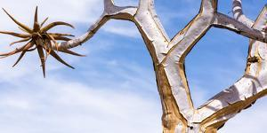 Africa, Namibia. Close Up of Quiver Tree by Jaynes Gallery
