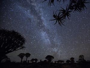 Africa, Namibia. Milky Way and Quiver Trees at Night by Jaynes Gallery
