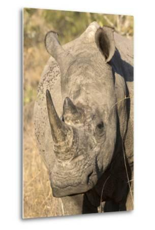Africa, South Africa. Close-Up of Rhinoceros
