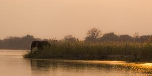 Africa, Zambia. Elephant Next to Zambezi River by Jaynes Gallery
