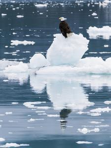 Alaska, Glacier Bay National Park. Bald Eagle on Iceberg by Jaynes Gallery
