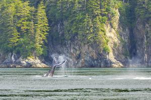 Alaska. Humpback Whale Tail Lobbing by Jaynes Gallery