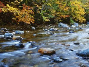 Autumn Beside the Cold River, Savoy State Forest Massachusetts, USA by Jaynes Gallery