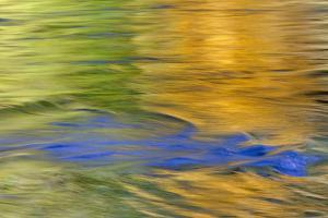 Autumn Colors Reflect in Quinault River,Quinault, Washington, USA by Jaynes Gallery