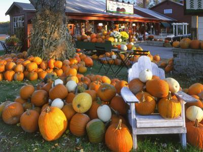 Autumn Display of Pumpkins New England, Maine, USA by Jaynes Gallery