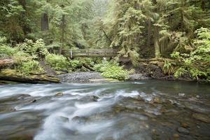 Barnes Creek Through Forest, Olympic National Park, Washington, USA by Jaynes Gallery