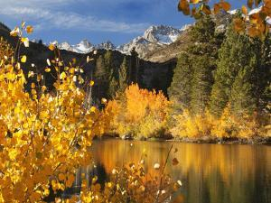 California. Autumn Color in Bishop Creek Canyon by Jaynes Gallery