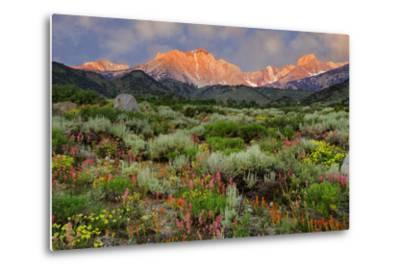 California, Sierra Nevada Mountains. Wildflowers Bloom in Valley