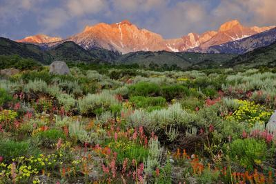 California, Sierra Nevada Mountains. Wildflowers Bloom in Valley