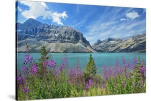 Canada, Alberta, Banff National Park. Crowfoot Mountains and fireweeds along Bow Lake. by Jaynes Gallery