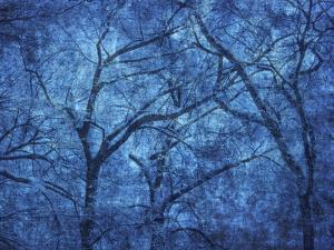 Canada. Blue abstract of trees. by Jaynes Gallery