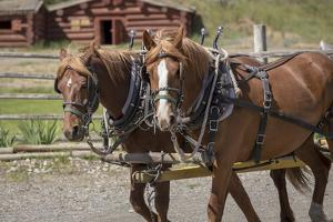 Canada, British Columbia, Cache Creek. Horses pulling stagecoach. by Jaynes Gallery
