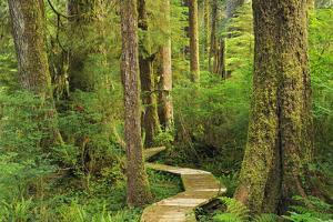 Canada, British Columbia, Carmanah-Walbran Provincial Park. Boardwalk in coastal rainforest. by Jaynes Gallery