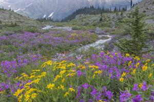 Canada, British Columbia, Selkirk Mountains. Wildflowers and stream in meadow. by Jaynes Gallery
