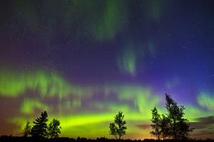 Canada, Manitoba, Birds Hill Provincial Park. Northern lights and tree silhouettes. by Jaynes Gallery