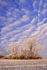 Canada, Manitoba, Starbuck. Hoarfrost on trees and farmer's field. by Jaynes Gallery
