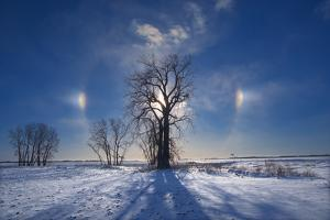 Canada, Manitoba. Sundogs and cottonwood trees in winter. by Jaynes Gallery