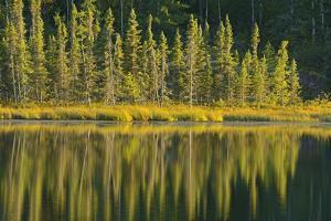 Canada, Manitoba, Whiteshell Provincial Park. Evergreen trees reflected in Lily Pond. by Jaynes Gallery