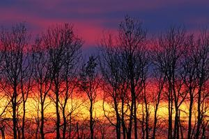Canada, Manitoba, Winnipeg. Trees and clouds at sunrise. by Jaynes Gallery
