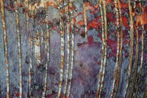Canada, Quebec, Mount St-Bruno Conservation Park. White Birch Root Bark Patterns by Jaynes Gallery