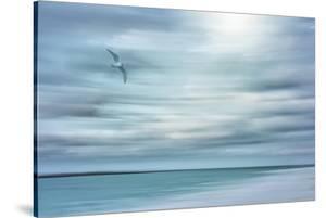 Caribbean, Bahamas, Little Exuma Island. Abstract of bird and beach. by Jaynes Gallery