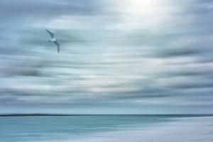 Caribbean, Bahamas, Little Exuma Island. Abstract of bird and beach. by Jaynes Gallery