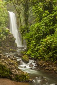 Central America, Costa Rica. Templo Waterfall in Rain Forest by Jaynes Gallery