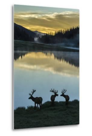 Colorado, Rocky Mountain National Park. Bull Elks Silhouetted Against Poudre Lake at Sunrise