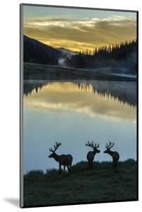 Colorado, Rocky Mountain National Park. Bull Elks Silhouetted Against Poudre Lake at Sunrise by Jaynes Gallery