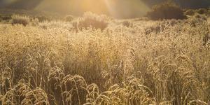Colorado. Sunlight on Fall Grasses by Jaynes Gallery