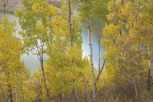 Colorado, Uncompahgre National Forest. Silver Jack Reservoir and Fall Aspens by Jaynes Gallery