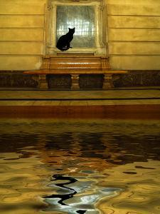 Concept of Black Cat and Water by Jaynes Gallery