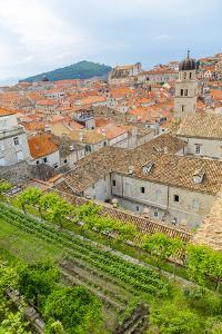 Croatia, Dubrovnik. Overview of walled city and garden. by Jaynes Gallery