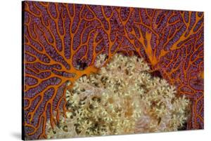 Fiji. Sea fan and soft corals. by Jaynes Gallery