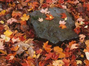Forest Floor in Fall, World's End State Park, Pennsylvania, USA by Jaynes Gallery