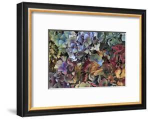 Hydrangeas in Garden, Portland, Oregon, USA by Jaynes Gallery